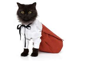 cat clothes cats wearing clothes pictures and