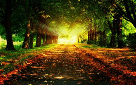 sun ray background - HD Desktop Wallpapers   4k HD