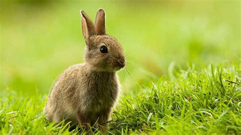 tapis de cuisine casa 25 mignons petits lapins
