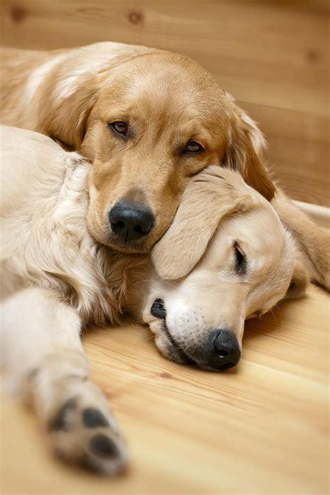 irrtum  hunde brauchen kontakt zu anderen hunden