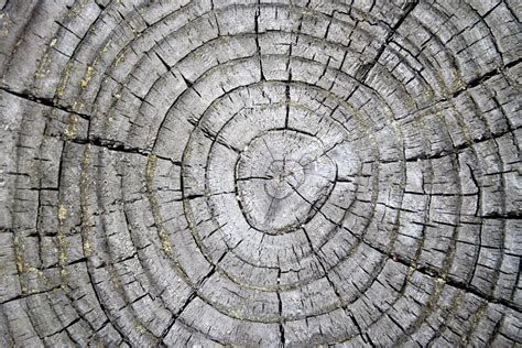 picture tree rings weathered stump texture wood