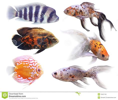 poissons d aquarium photographie stock image 19401752