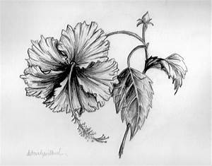 hibiscus drawing - Google Search | Leaves | Pinterest ...