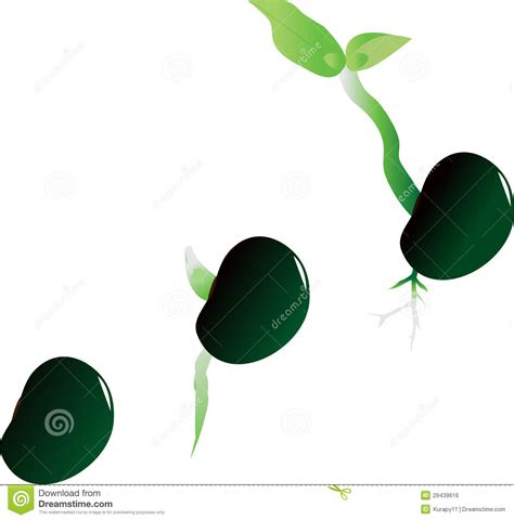 Stages Of Growth Of Plant Royalty Free Stock Image  Image 29439616