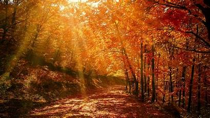 Forest Autumn Park Sunlight Ultrawide Monitor Foliage