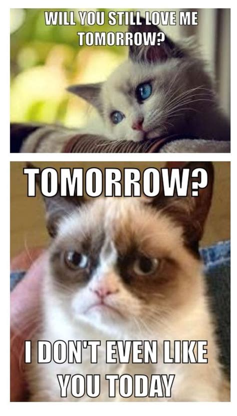 Grumpy Cat New Years Meme - grumpy cat meme grumpycat animals pinterest new year s quotes cats and the o jays