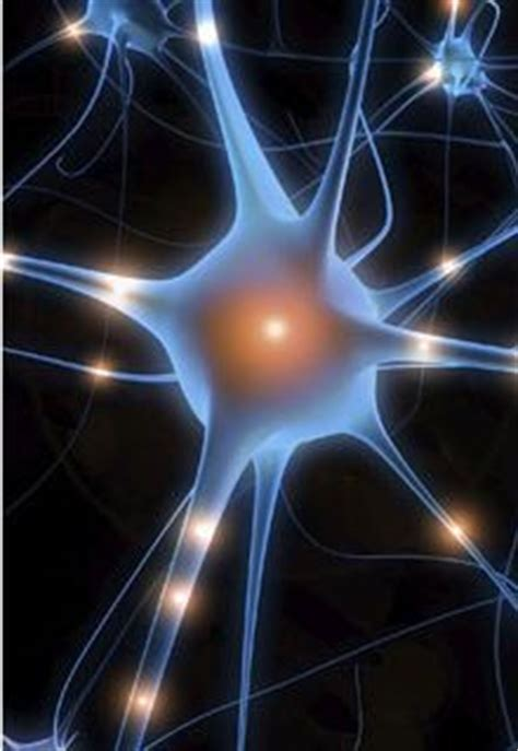 neurotransmitters brain  balance