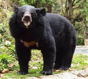 Black Bear Zoo