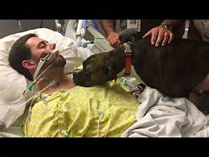 Dog Says The Final Goodbye to his Dying Owner In Hospital ...