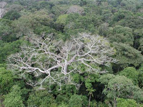 6 daftar nama obat ginjal yang aman untuk dikonsumsi. Pengertian Dan Ciri-Ciri Hutan Hujan Tropis Yang Penting Untuk Diketahui - Pengertian Apapun