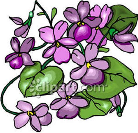 violett clipart clipground