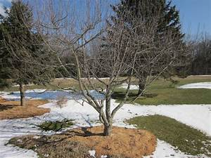Pruning Fruit Trees And Grafting