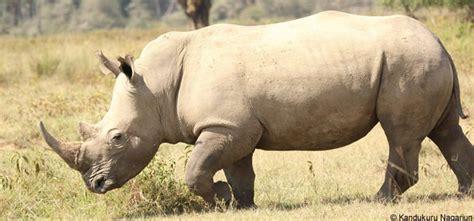 Black Rhino Protection