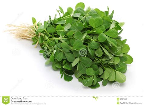 Image Gallery Methi Leaves