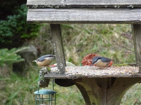 free backyard bird feeding event at gertens thrifty