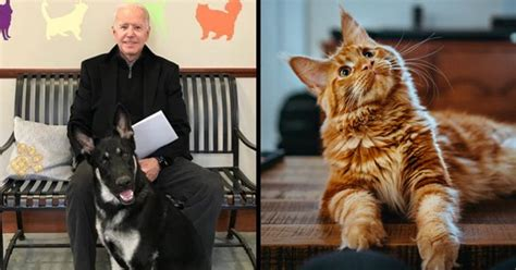 Not Just First Dogs, Biden Is Planning To Get A ...