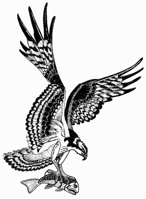 osprey pictures pics images     tattoo