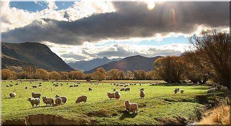 zealand farm holidays   ultimate getaway