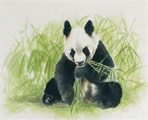 Panda Bamboo Painting