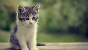 Lovely Cat Wallpaper HD | PixelsTalk.Net