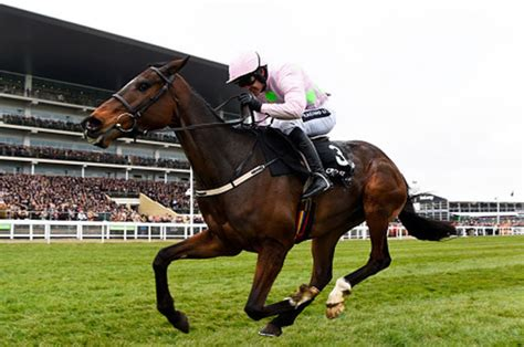 horse racing ruby bets tips walsh cheltenham rides ladies betting festival douvan sport patrick dailystar