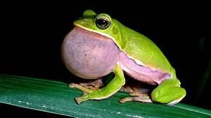 Reptiles & Amphibians   live knowledge world