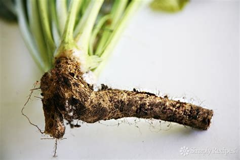what is horseradish made from how to make homemade prepared horseradish simplyrecipes com