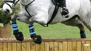Are You An Eventing Rules Guru  Test Your Knowledge Of The
