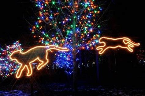 pictures of zoos and light show on