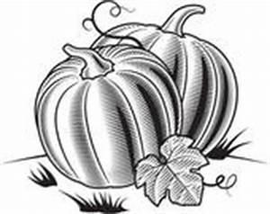 Kürbis Schwarz Weiß : clipart schwarz wei k rbis k15846102 suche clip art illustration wandbilder zeichnungen ~ Orissabook.com Haus und Dekorationen