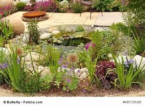 Tiere Im Gartenteich : leben im gartenteich welche tiere siedeln sich gerne an ~ Eleganceandgraceweddings.com Haus und Dekorationen