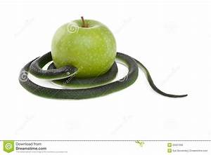 Snake Coiling Around A Green Apple Royalty Free Stock ...