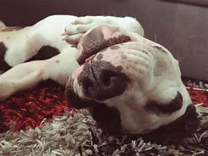 Perros muy adorables durmiendo. ¡Son una monada ...