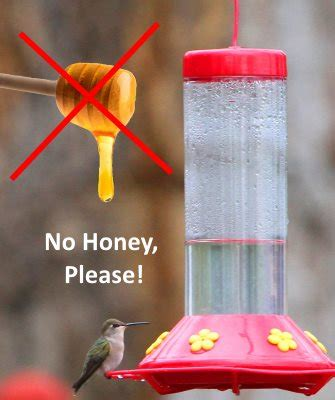 hummingbird food recipe make your own nectar