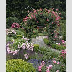 Cottage Garden With Flower Carpet Roses  Flower Carpet