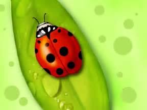 table decoration ideas 9 ladybug artworks messagenote