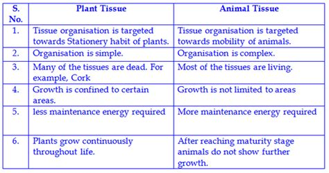differences   tissues  plants