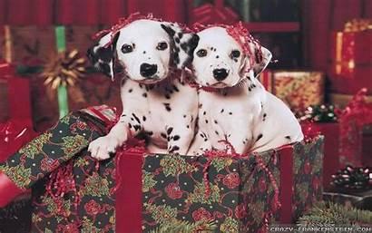 Christmas Puppies Dalmatian Puppy Wallpapers Dog Desktop