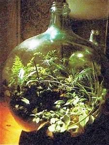 Pflanzen Die Kein Licht Brauchen : flascheng rten raum zimmerpflanzen ~ Lizthompson.info Haus und Dekorationen