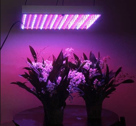 Top 5 uses for a UV lamp and ultraviolet light - Urban