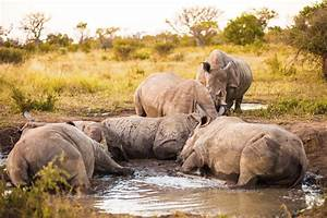 sudafrika reisebericht selbstfahrerrundreise sudafrika With katzennetz balkon mit safari garden route