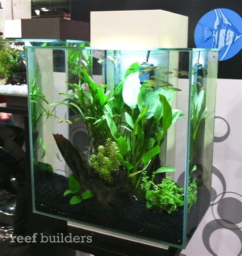 New Fluval Edge 46l Aquarium Is Twice As Tall And Double