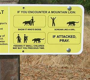 What to do if a... Lion Sign Quotes