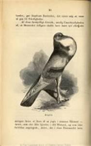 On The Origin Of Species Illustrations   www.pixshark.com ...