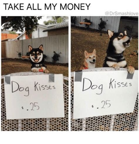 Kiss Me Dog Meme - take all my money dog kiss love love meme on me me