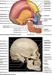 Part 1 The Axial Skeleton