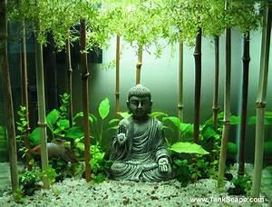 Deco Aquarium Zen : tank scape my planted buddha betta tank ~ Melissatoandfro.com Idées de Décoration