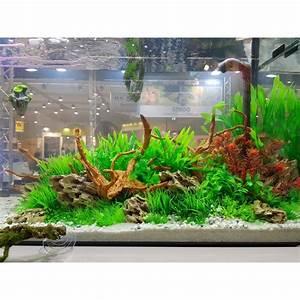 Mini Plante Artificielle : hobby plante artificielle ludwigia 34cm aquaplante ~ Teatrodelosmanantiales.com Idées de Décoration