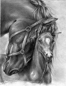 Horse Drawings | Art Decoration Design