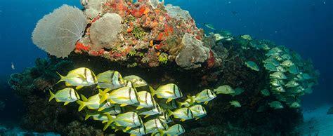bimini scuba diving   bahamas  islands
